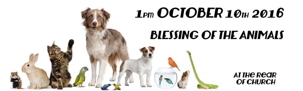 bless-the-animals